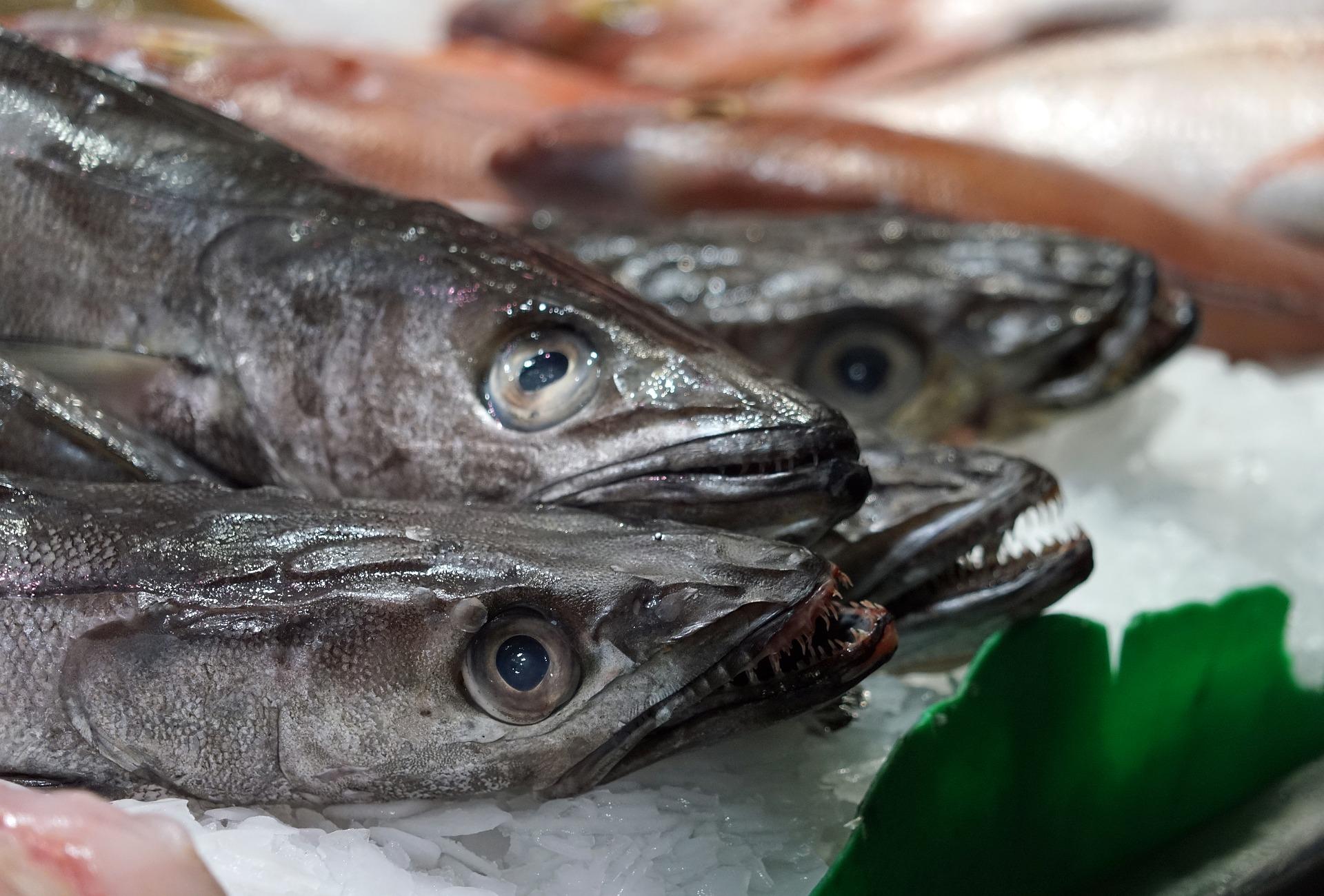 El Niño, descartes y regulaciones, los factores que influirán en la producción pesquera