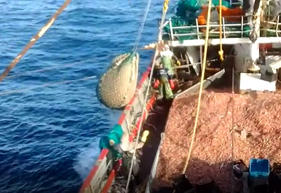 Ya se pescaron más de 70 mil toneladas de langostino