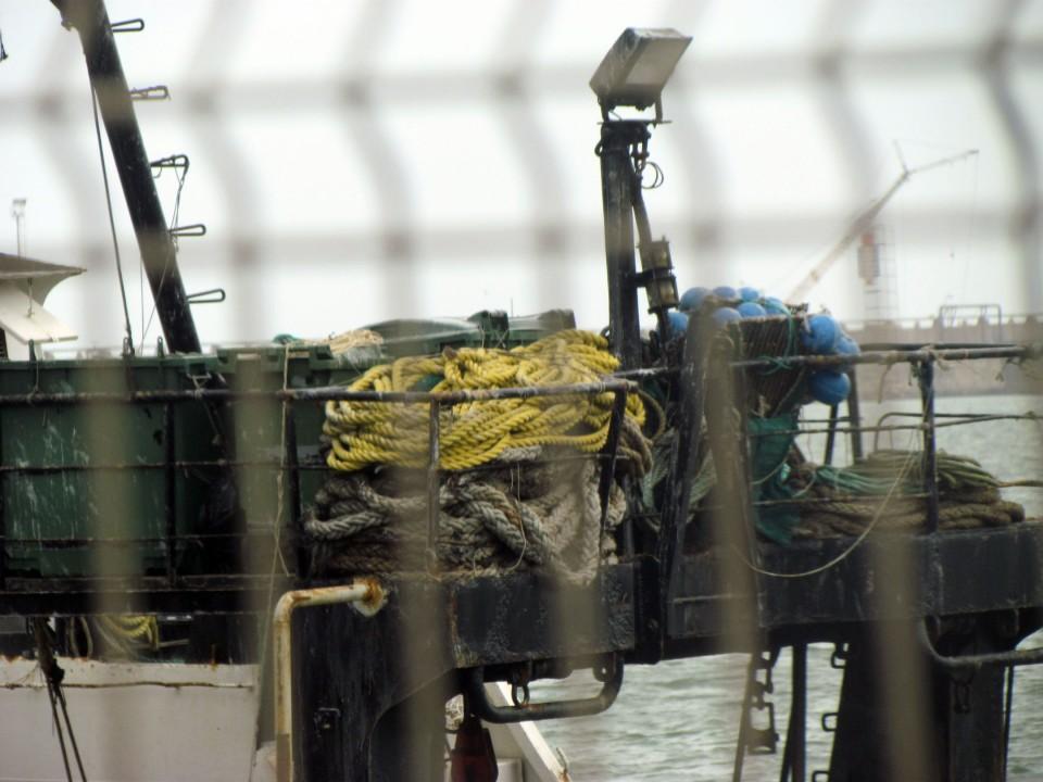 Actualizan veda de merluza en Zona Común de Pesca