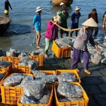 Exportaciones pesqueras vietnamitas llegarían a los U$S 8.000 millones