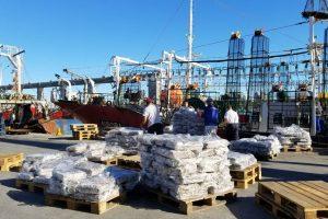 Mar del Plata centraliza desembarques del calamar de los poteros