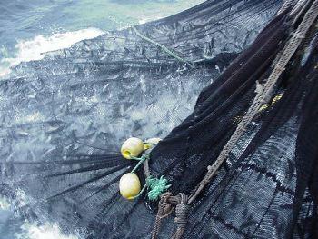 Cambio climático podría afectar el tamaño de los peces y la pesca