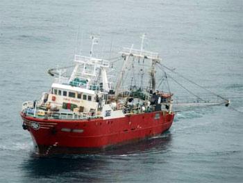 Científicos prevén otro buen primer semestre para la pesca de langostino