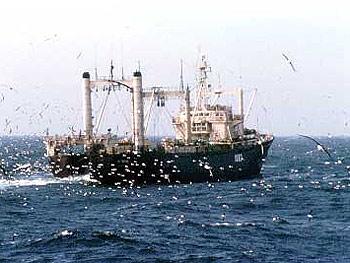 El Brexit podría tener serio impacto en la industria pesquera de las Malvinas