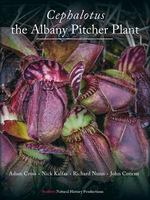 <em>Cephalotus</em>—the Albany Pitcher Plant