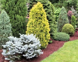 Conifer Garden Ideas Bohonos6 Design With Landscaping with 23+ Dwarf Conifers Offer Big Solutions
