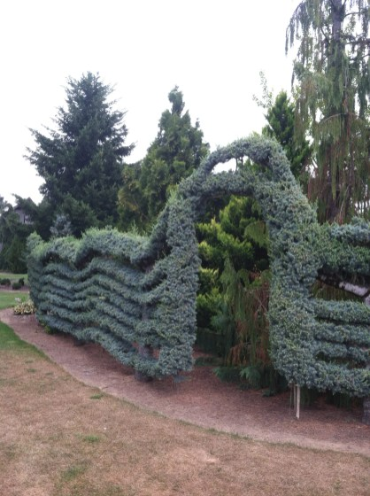 Cool Conifer Garden Pictures You Have To See These Cinthia Milner throughout ucwords]