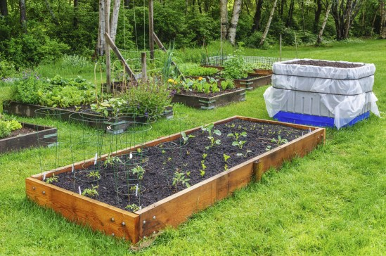 How To Create Your Own Fruit And Vegetable Garden with regard to [keyword