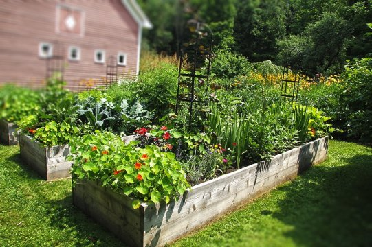 On The Rise The Benefits Of Raised Bed Gardening Green Mountain pertaining to [keyword