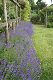 The Farmhouse Garden Lavender Fields Selborne Hampshire pertaining to ucwords]