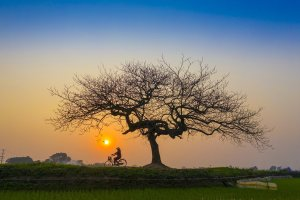 sunset, afternoon, bicycle