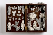 Nature-box-KATHARINE-MORLING-image-by-Stephen-Brayne-copy-1-700x461