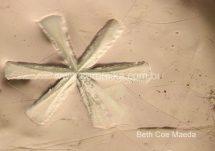 estrela do mar em esmalte ceramico cristalino