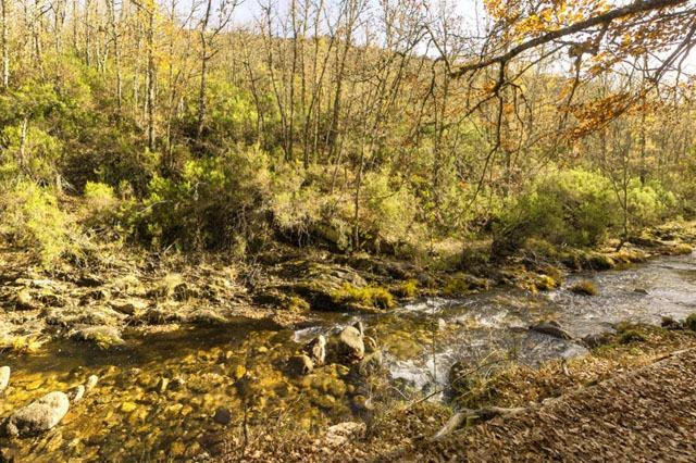 Zona cerca del río en Hayedo de Montejo