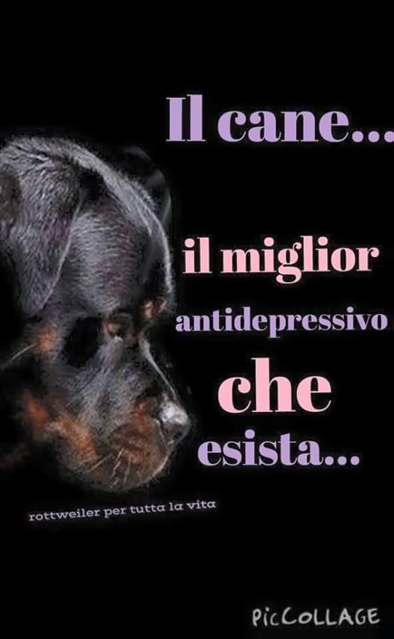 Il cane, il miglior antidepressivo