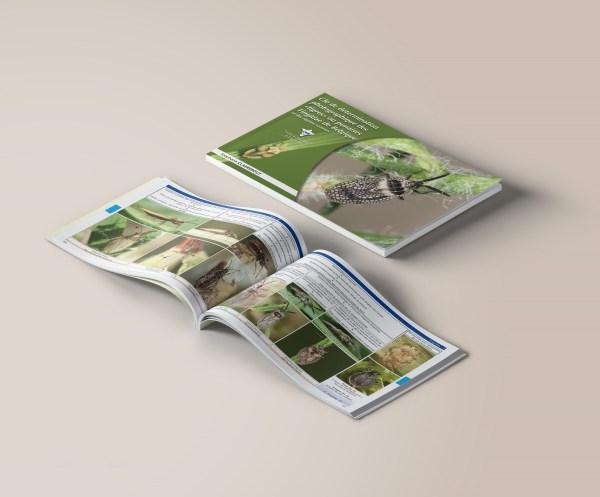clé photographique des punaises Tingidae de Belgique