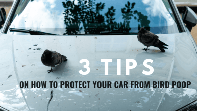 Photo of 3 Tips on How to Protect Your Car from Bird Poop