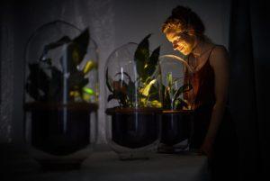 Desarrollan lámpara capaz de generar iluminación, mediante energía generada por plantas.