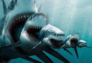 Un joven estudiante grabó un impresionante tiburón que nos recuerda al extinto megalodón.