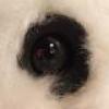 Codegen'den Şirin Webcam