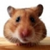 Her Şeyi Kontrol Eden Mouse