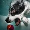 Köpeklerin Eğlenceli Su Altı Fotoğrafları