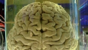 IARPA, İnsan Benzeri Robot Beyni İstiyor!