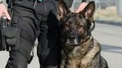 Klon köpek Çin'de polis oldu