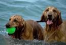 """PRVI """"UNDERDOG"""" U nedjelju u Crikvenici plivačko natjecanje pasa i njihovih vlasnika"""