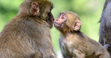 Gdje za vikend: Posjetite carstvo snježnih majmuna