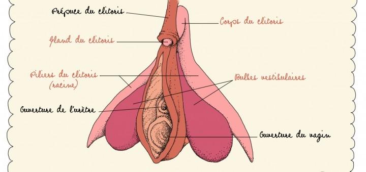Tout savoir sur le clitoris