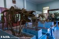 Kerangka Fauna di Pintu Masuk Museum Zoologi