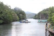 hutan-mangrove-4