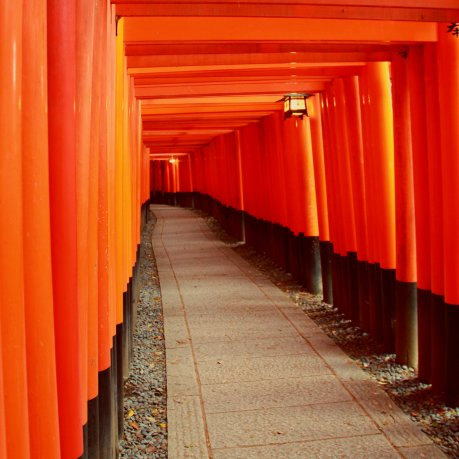 Thousands of Torii, Fushimi Inari, Kyoto, Japan