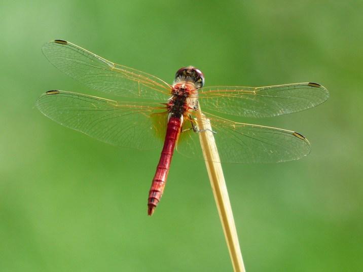 dragonfly-177338_1280