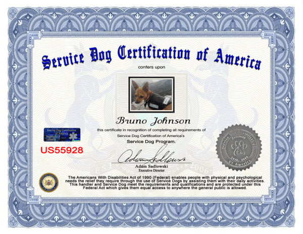 Certificate-with-holo22