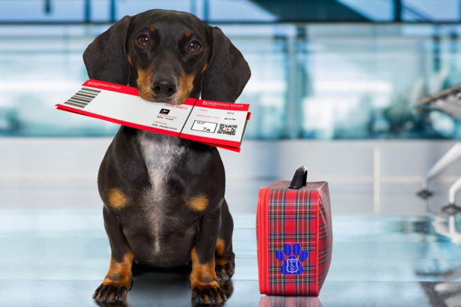 service dog at airport holding boarding pass