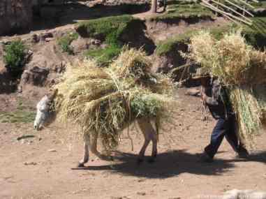 Peru Andes031