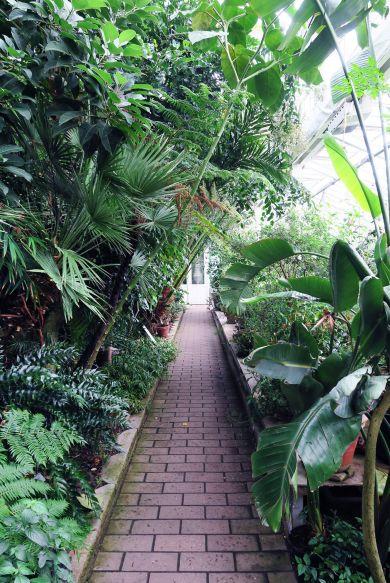 Interior del Jardín Botánico de Copenhague, Dinamarca
