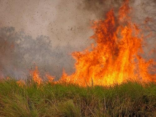Karpagam Chelliah. Fire. 2009. Kaziranga.