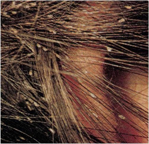 Como colorar los cabellos por los medios naturales