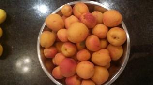 Warner's Farm apricots