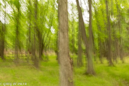 Deliberate Blur effect with camera movement and slow shutter.