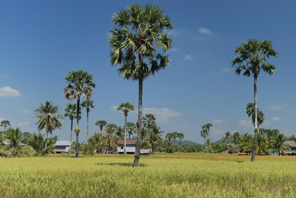 Provincie Kampot