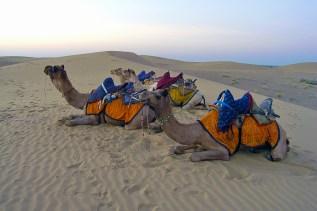 Thárská poušť