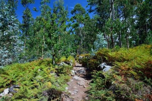Pohádkový les (den 4)