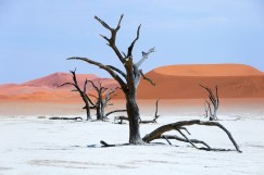 NP Namib | Deadvlei