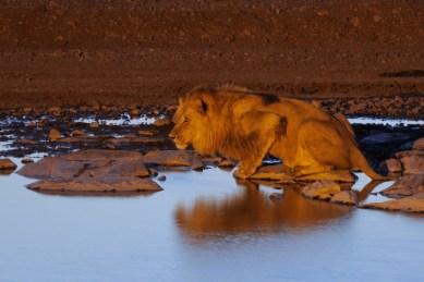 Národní park Etosha