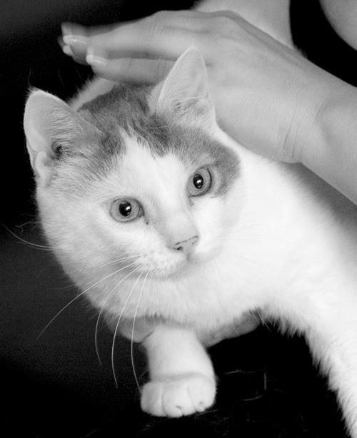 chat-tu-nous-manques