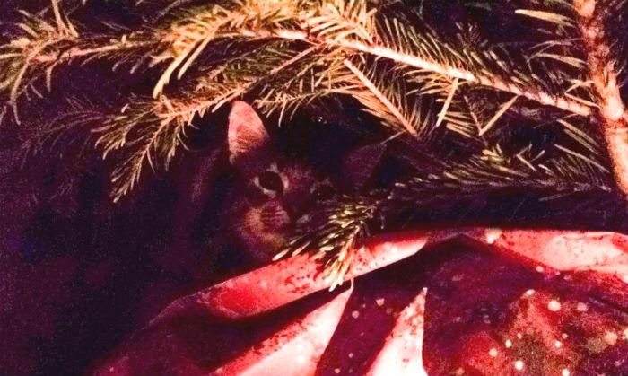 Le chat saute dans le sapin de Noël